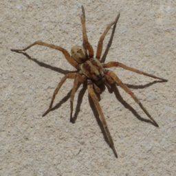Уничтожение пауков в Наро-фоминске